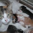 母さん猫と6匹の子どもたち